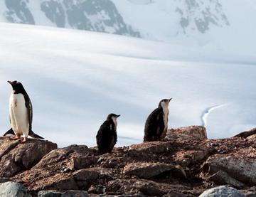 Antarctique, le voyage d'une vie