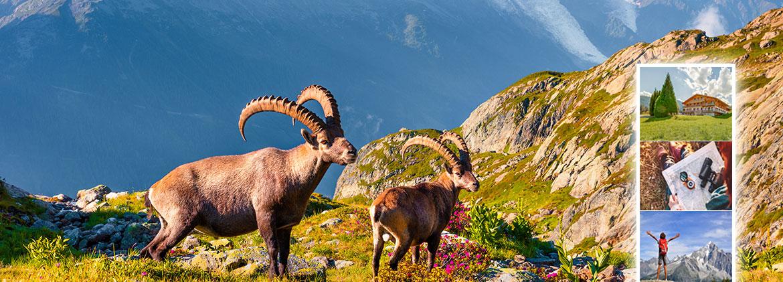 Activités insolites et familiales près du Mont-Blanc