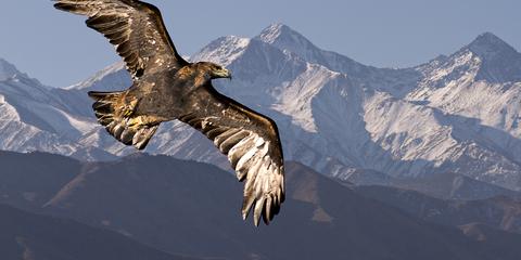 Séjours Mont-Blanc Nature