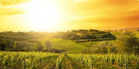 Croisière œnologie, le monde fabuleux de la vigne et du vin